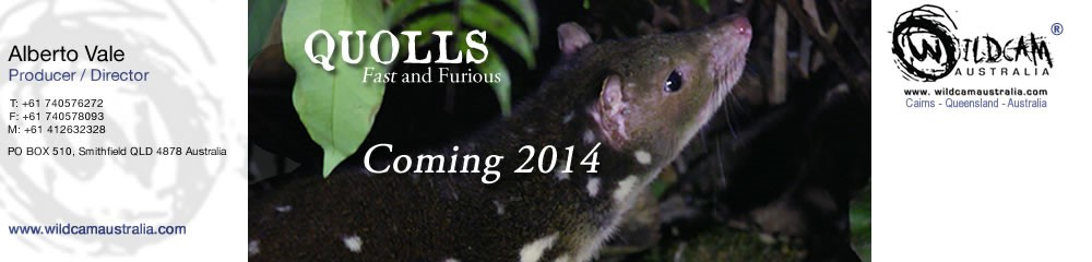 Quoll Documentary- wildcam