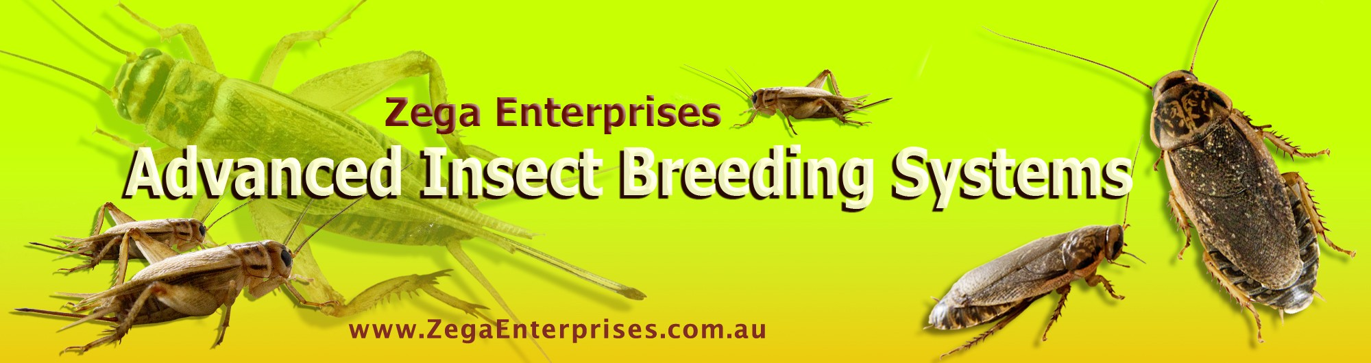 Advanced Insect Breeding Systems
